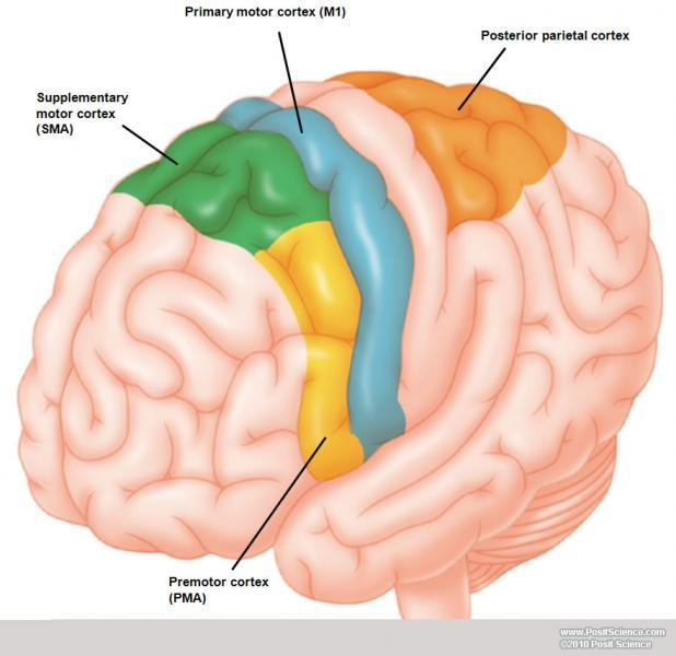 Brain Anatomy Images also The Peripheral Nervous System additionally Stock likewise Optics in addition Egypt Karnak Temple The Temple In Man R A Schwaller De Lubicz. on diagram of the human eye